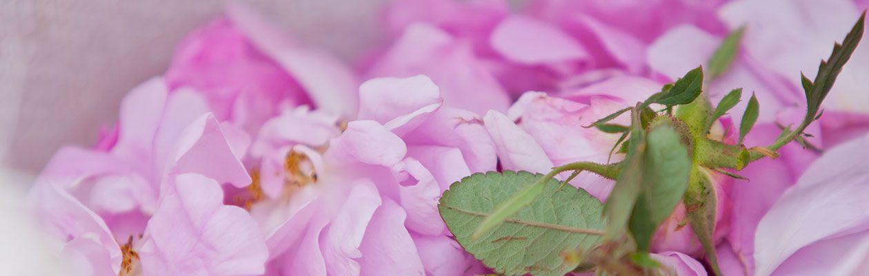 Rose-Ingredient-jpg