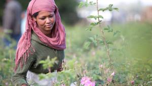 Dr.Hauschka: Organic raw materials from around the world