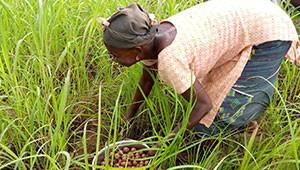 Dr.Hauschka: Shea butter from Burkina Faso