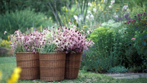 Dr.Hauschka: Our medicinal herb garden