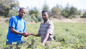 Dr.Hauschka: Cultivation partnerships worldwide
